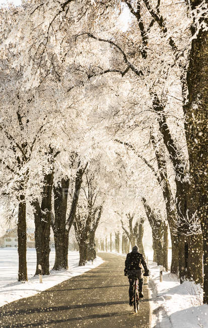 Germany, Bavaria, cyclist on treelined country road in winter — Stock Photo