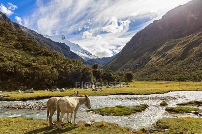 América do Sul, Peru, Andes, Parque Nacional Huascaran, paisagem de montanha com burros no fluxo de água em primeiro plano — Fotografia de Stock