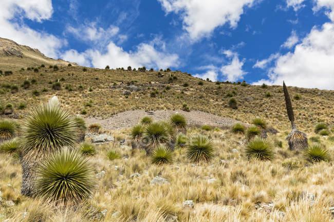 América do Sul, Peru, Andes, flora Parque Nacional Huascaran, encostas de montanhas ensolarado — Fotografia de Stock