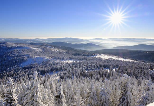 Allemagne, Bavière, forêt de Bavière en hiver par temps ensoleillé — Photo de stock