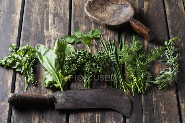 Hierbas verdes frescas en la mesa de madera oscura - foto de stock