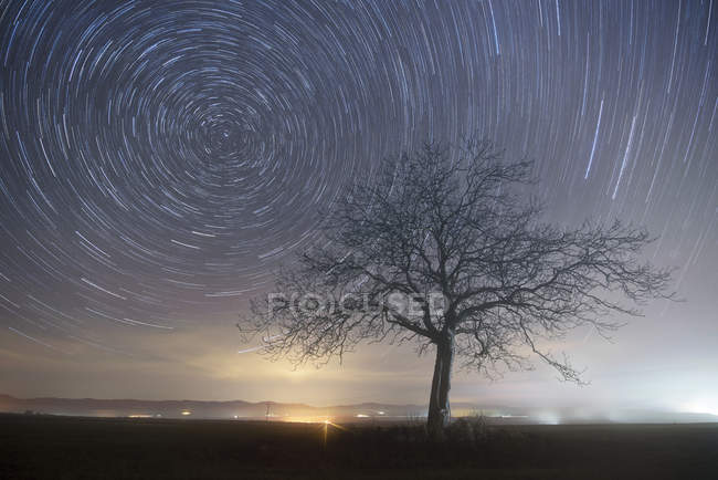 Star trails over tree. — Stock Photo