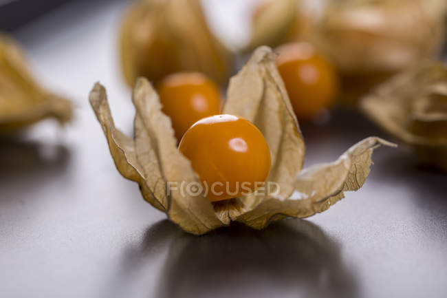 Physalis berries in dried flowers — Stock Photo