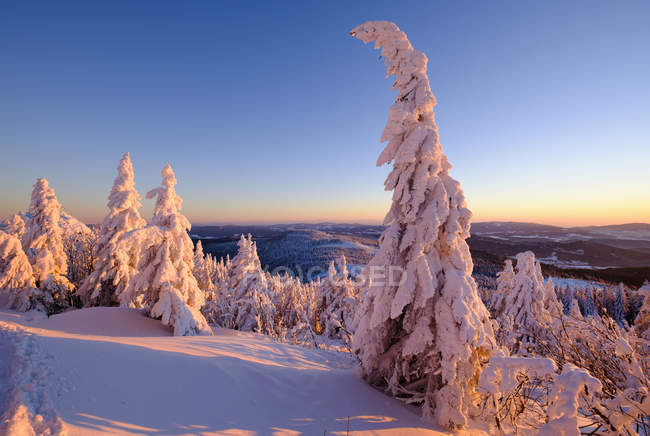 Sapins enneigés de Germany, Bavaria, grand Arber, Arbermandl, sur la montagne — Photo de stock