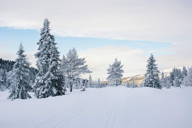 Wintertime in Scandinavia - Cross-Country Ski Run in Snowy White — Stock Photo
