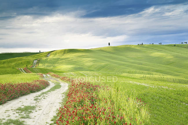 View of meadow with green grass and flowers during daytime — Stock Photo