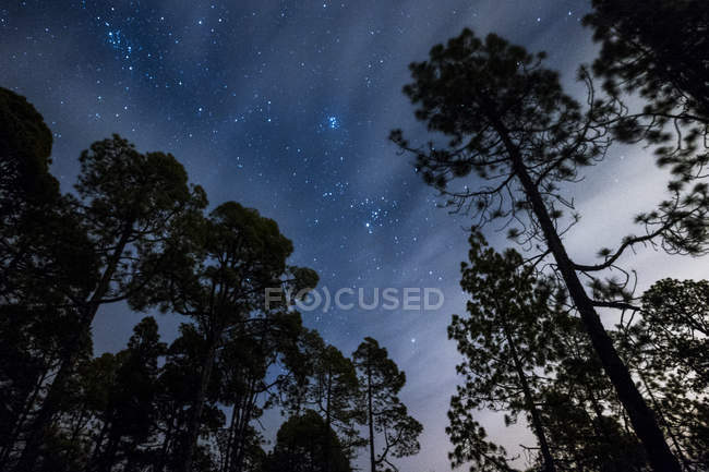 Spain, Tenerife, starry sky in Teide National Park — Stock Photo