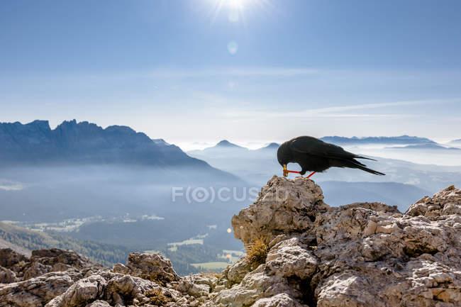 Vista laterale chough uccello dal becco rosso, paesaggio montano soleggiato sullo sfondo — Foto stock