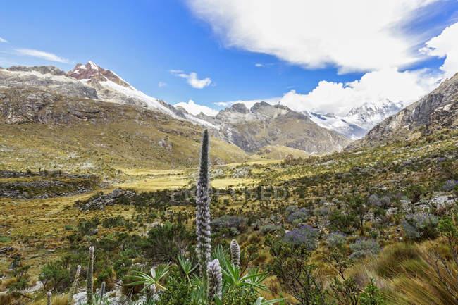 Peru, Andes, Parque Nacional Huascaran, Scenic Ver os com wildplants e montanhas no fundo — Fotografia de Stock
