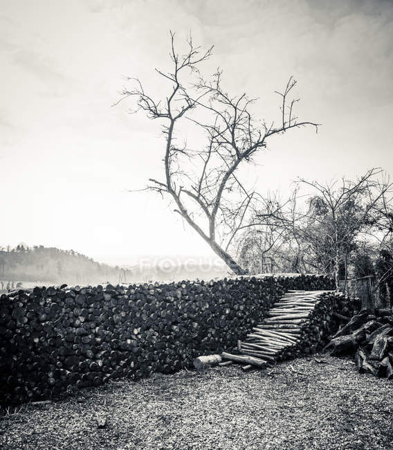 Bois de chauffage empilé à l'extérieur dans la campagne en hiver — Photo de stock