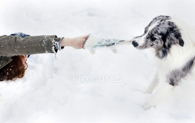 Young woman playing with her border collie in the snow — Stock Photo