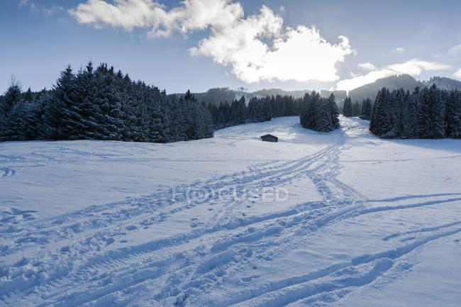 Германия, Нессельванг, зимний пейзаж с деревьями на снег — стоковое фото