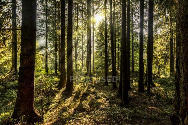 Tchéquie, Hradec Kralove, forêt dans le parc national des Monts Géants — Photo de stock