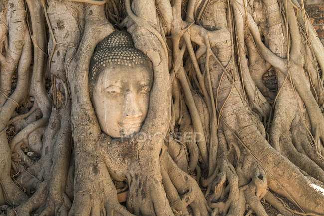 Ayutthaya Historical Park, Thailand, Asia, view of sculpture in roots — Stock Photo