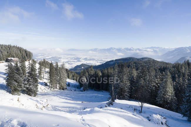 Вид склона с снег и деревья в дневное время — стоковое фото