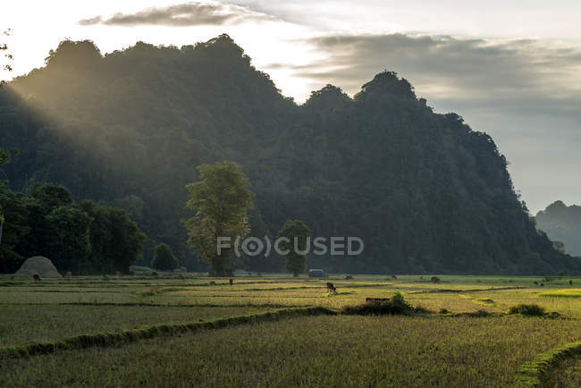 Landschaft mit  Karstformationen, Hpa-an, Myanmar, Asien, landscape with karst mountains,  Hpa-an, Hpa-an, Myanmar, Asia — Foto stock