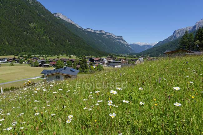 Vista di erba con fiori durante il giorno — Foto stock