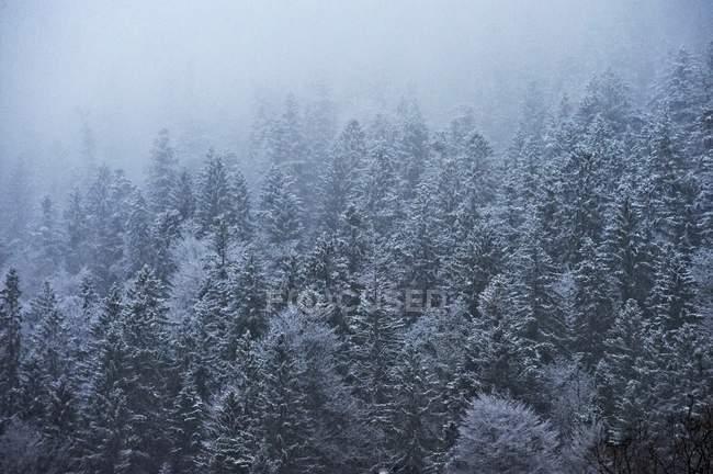 Вид на деревья в снегу в дневное время — стоковое фото