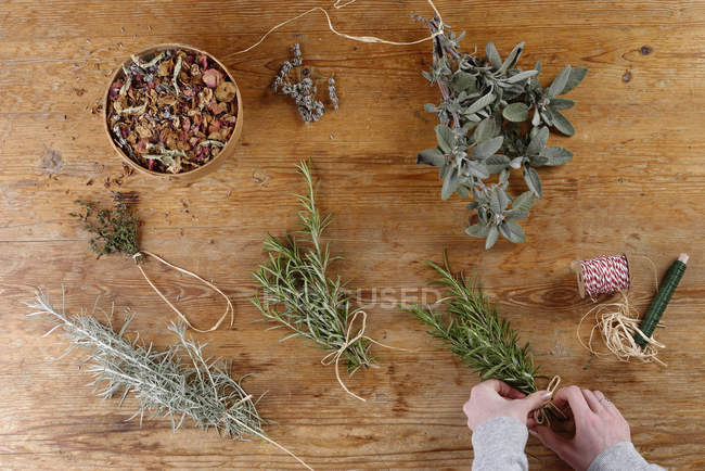 Person hands bundling various herbs for drying — Stock Photo