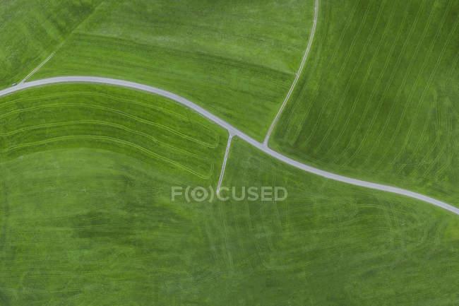 Vue du champ d'herbe verte pendant la journée — Photo de stock
