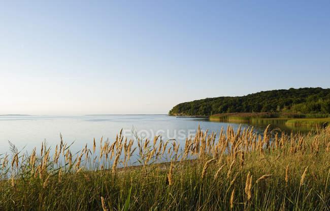 Vista da lagoa e grama alta na costa durante o dia — Fotografia de Stock