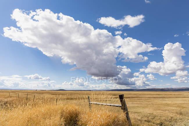 Vista del campo con erba secca e recinzione durante il giorno — Foto stock