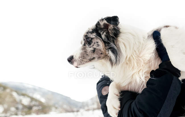 Closeup of dog in the arms of its owner — Stock Photo