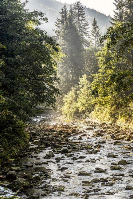 Chequia, Hradec Kralove, Parque Nacional de las Montañas Gigantes, Elba en el valle del Elba cerca de Spindleruv Mlyn - foto de stock