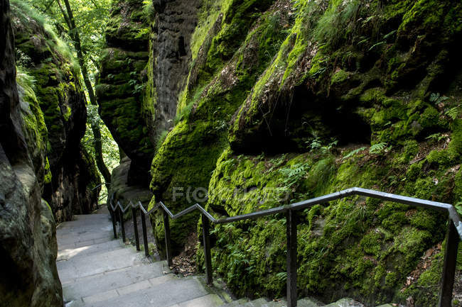 Germany, Saxony, Elbe Sandstone Mountains, Stairs of hiking path — Stock Photo