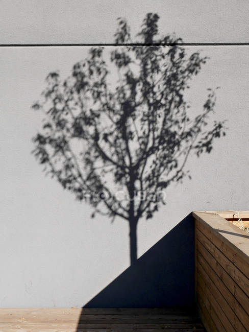 Wall with shadow of tree — Stock Photo