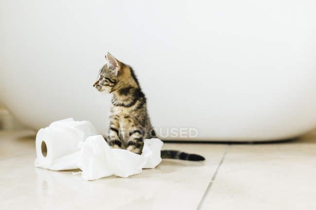 Mignon tortue chaton jouer avec rouleau de toilette — Photo de stock