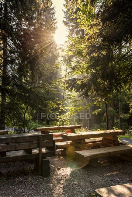 Czechia, Hradec Kralove, área de descanso e floresta no Parque Nacional das Montanhas Gigantes — Fotografia de Stock