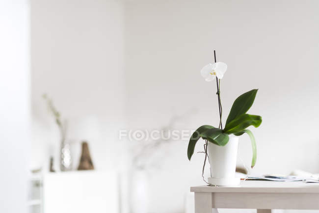 Orchid plant in bloom on table at home — Stock Photo