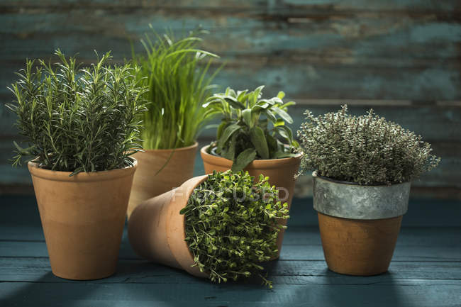 Closeup view of five different potted plants on wooden surface — Stock Photo