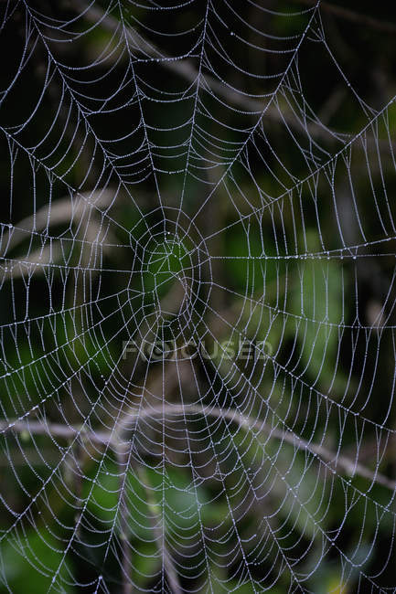 Abandoned spiderweb with dewdrops, closeup view — Stock Photo