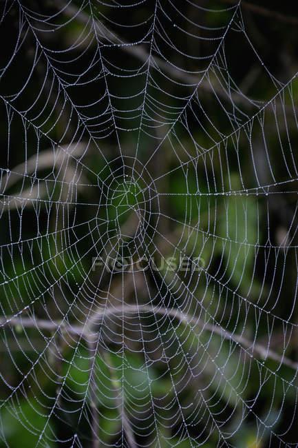 Abandonado teia de aranha com gotas de orvalho, closeup vista — Fotografia de Stock