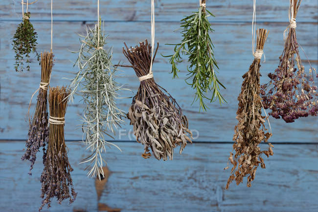 Hierbas colgando para secar - foto de stock