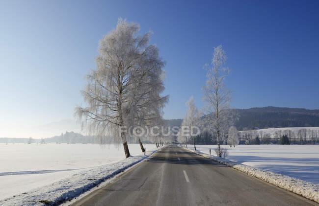 Alemania, Sindelsdorf, carretera del condado vacía en invierno - foto de stock
