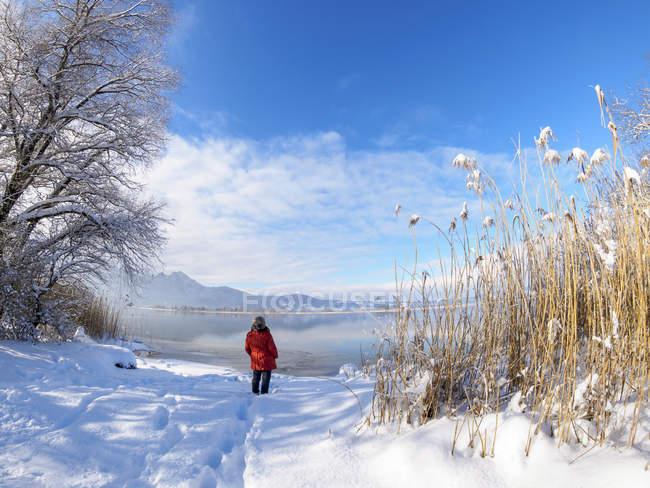 Alemania, Baviera, Kochel am See, mujer de pie en Kochel lago en invierno - foto de stock