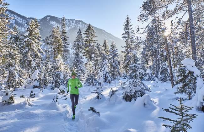 Mujer de Valle, Vorderriss, Alemania, Baviera, Isar a correr por el bosque de invierno - foto de stock