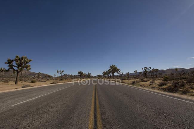 Vista da estrada vazia e árvores nos lados durante o dia — Fotografia de Stock