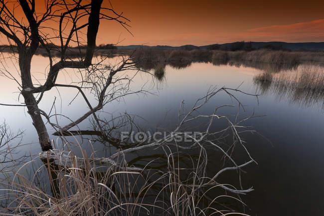 Spain, Daimiel, Tablas de Daimiel National Park — Stock Photo