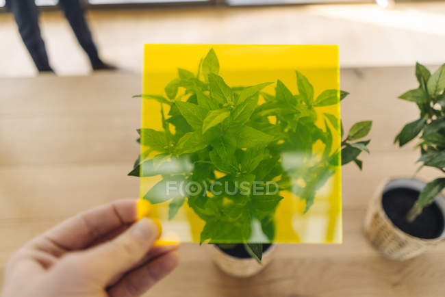 Ansicht der menschlichen Hand, die gelben Bildschirm über Topfpflanze beschnitten — Stockfoto