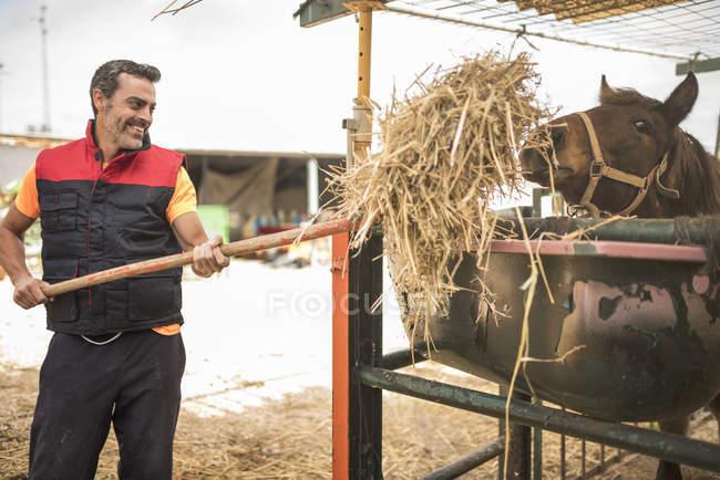 Uomo che lavora nella fattoria di nutrire i cavalli — Foto stock