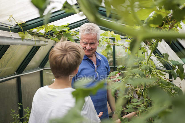 Grandfather with grandson in greenhouse — Stock Photo