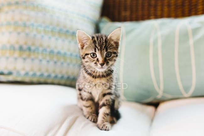 Carino tartaruga gattino seduto sul divano — Foto stock