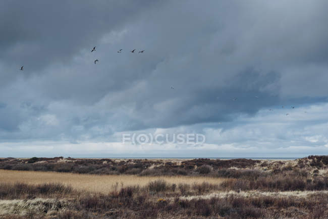 Denmark, Skagen, dune landscape during daytime — Stock Photo