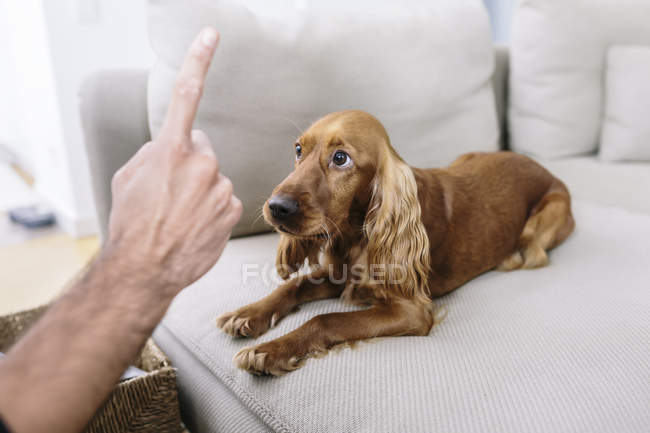 Cropped image of man teaching dog at home — Stock Photo
