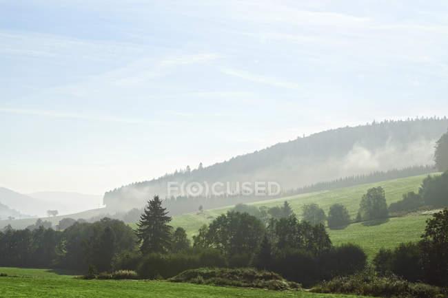 Alemania, Baden-Wurttemberg, Colinas brumosas en la Selva Negra - foto de stock