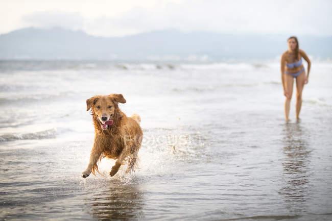 Messico, Nayarit, Giovane donna in bikini che gioca con il suo cane Golden Retriever in spiaggia — Foto stock